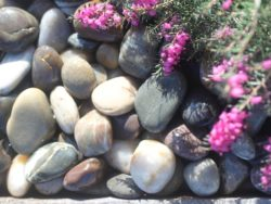 MIXED POLISHED COBBLES 2-4CM