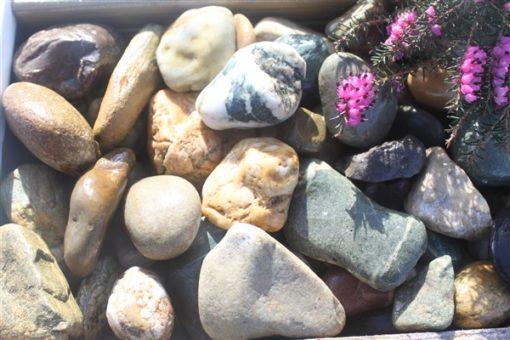 MINI BEACH COBBLE