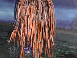 WEEPING WILLOW COPPER TREE