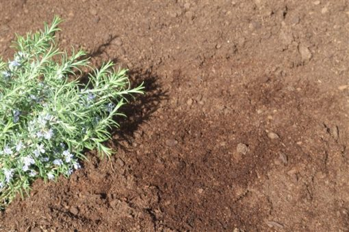 TOP SOIL AND COMPOST MIX