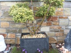 GRANITE FLOWER POTS